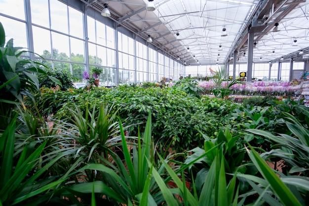 Plantas e flores em estufa moderna