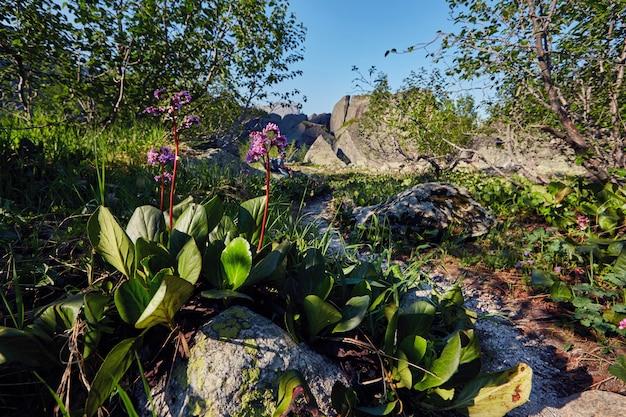 Plantas e flores raras das montanhas crescem perto do córrego da montanha em um dia ensolarado e claro