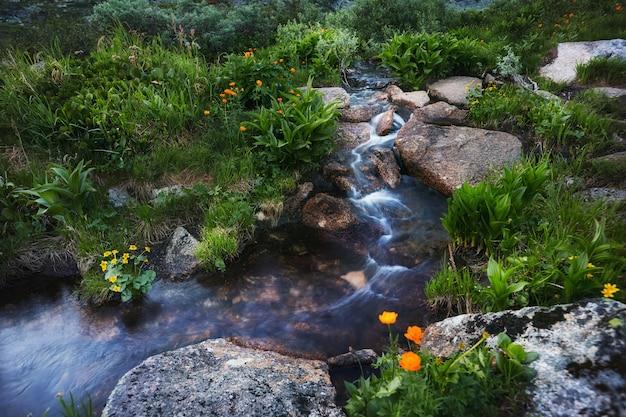 Plantas e flores raras das montanhas crescem perto do córrego da montanha