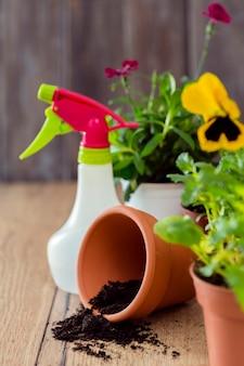 Plantas e vaso de flores de close-up