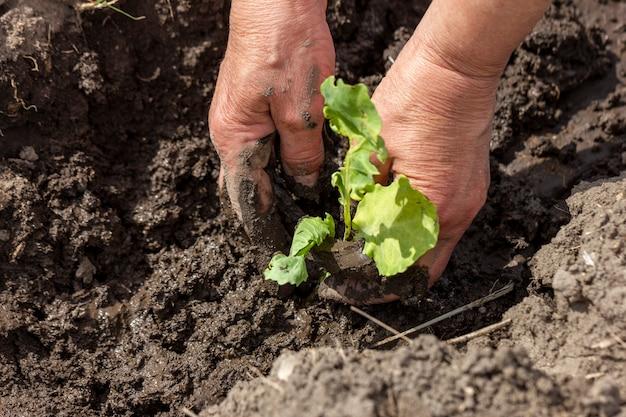 Plantas ecológicas de jardinagem em close-up