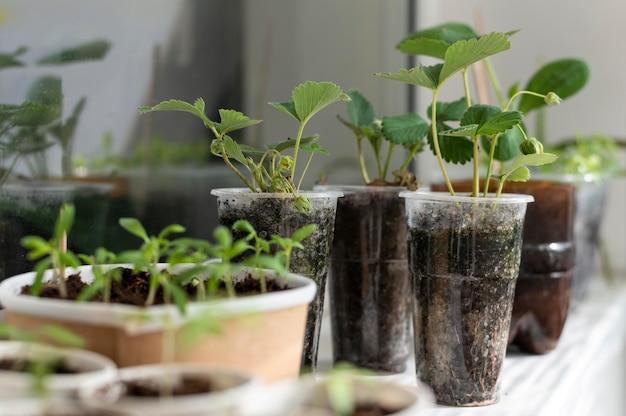 Plantas em arranjo de garrafas plásticas