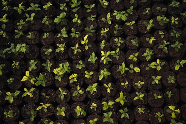 Plantas em bandeja de viveiro. textura.