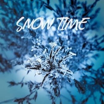 Plantas em close-up do gelo em um fundo azul escuro místico. o começo do inverno