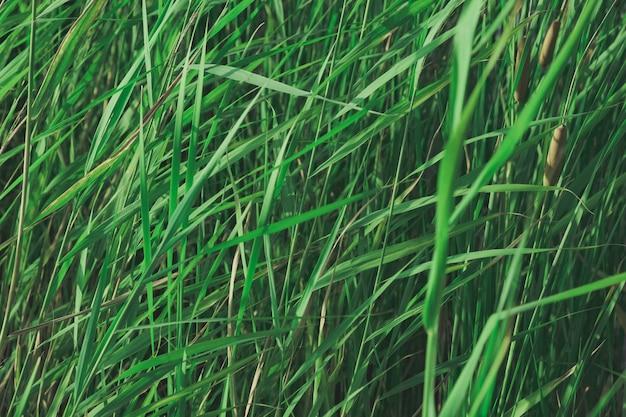 Plantas em cores verdes desbotadas.