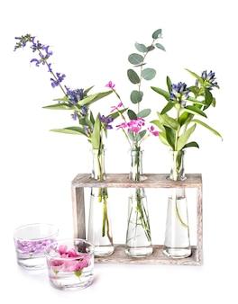 Plantas em tubo de ensaio