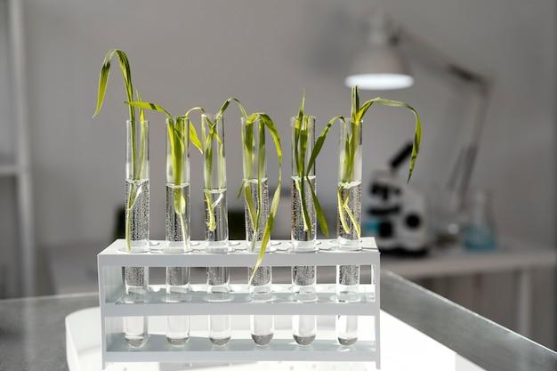 Plantas em tubos com arranjo de água