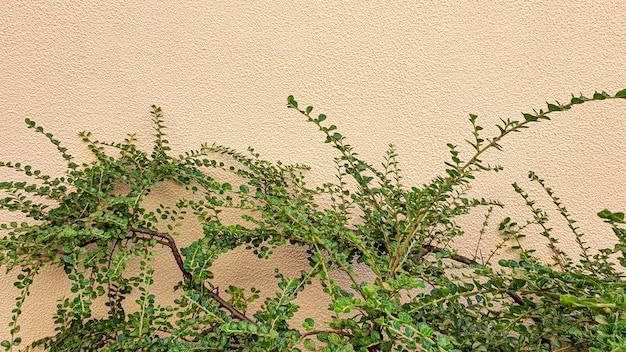 Plantas em um fundo de pedra. ramos com folhas verdes, flores. colheita de verão, casa de verão. fundos