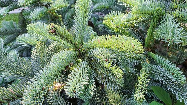 Plantas em um fundo de pedra. ramos de pinheiro, thuja e abeto.