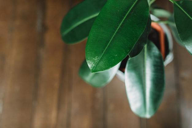 Plantas em um salão de casa