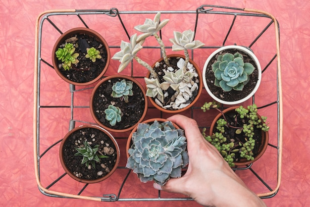 Plantas em uma cesta de metal