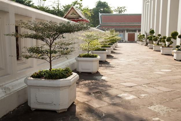 Plantas em vaso ao longo do percurso.