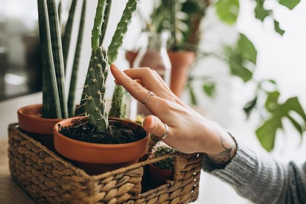 Plantas em vaso em cima da mesa