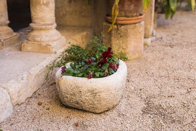 Plantas em vasos verdes em vaso bonito ao ar livre.