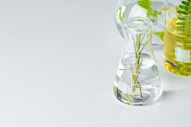Plantas em vidraria de laboratório em fundo branco. conceito de pesquisas químicas de medicamentos e produtos para a pele