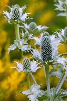 Plantas estranhas ou flores oblongas com folhas espinhosas e fibras azuis fofas. fundo amarelo com verde turva. quadro vertical.
