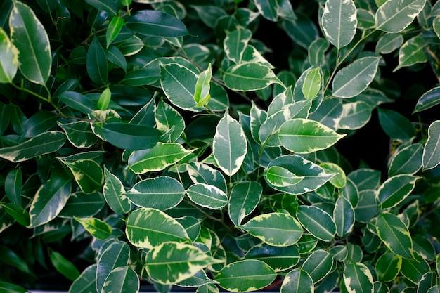 Plantas exóticas na moda, vista superior. plantas de interior, área verde.