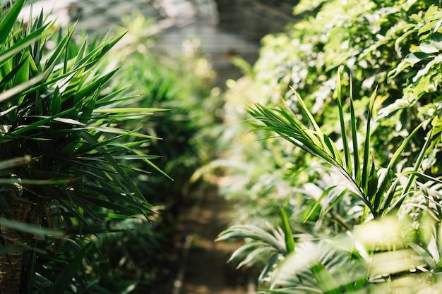 Plantas frescas crescendo na estufa