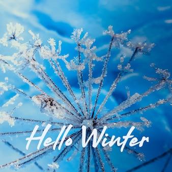 Plantas geadas, close-up em um fundo azul escuro místico o início do inverno, a primeira geada