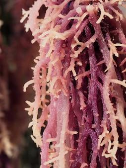 Plantas marinhas exóticas