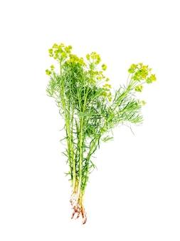 Plantas medicinais, ervas isoladas no branco.