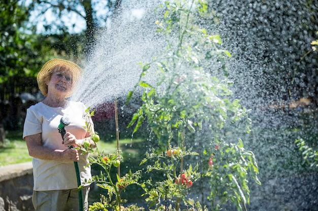 Plantas molhando da mulher sênior com uma mangueira