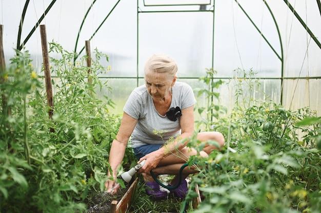 Plantas molhando de mulher idosa madura com mangueira de água.