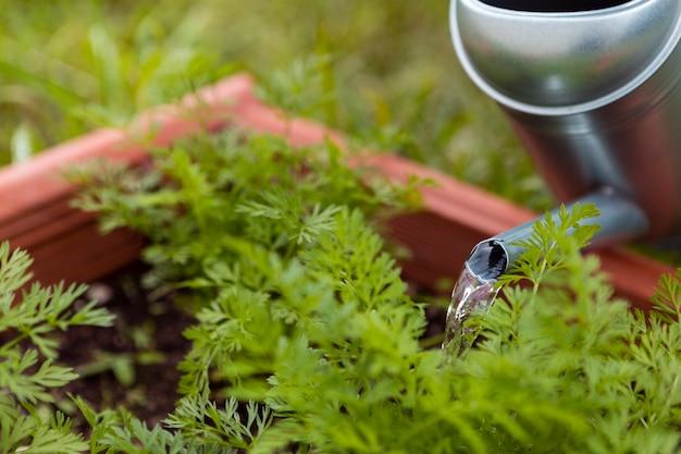 Plantas molhando do jardineiro do close-up com aspersor