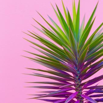 Plantas no conceito de moda rosa. arte minimalista em verde palmeira