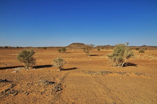 Plantas no deserto do saara do sudão