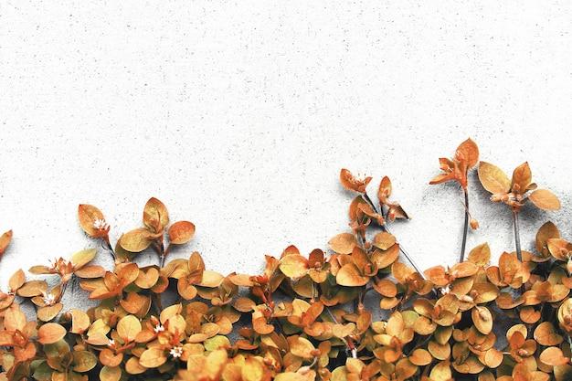 Plantas no fundo da parede