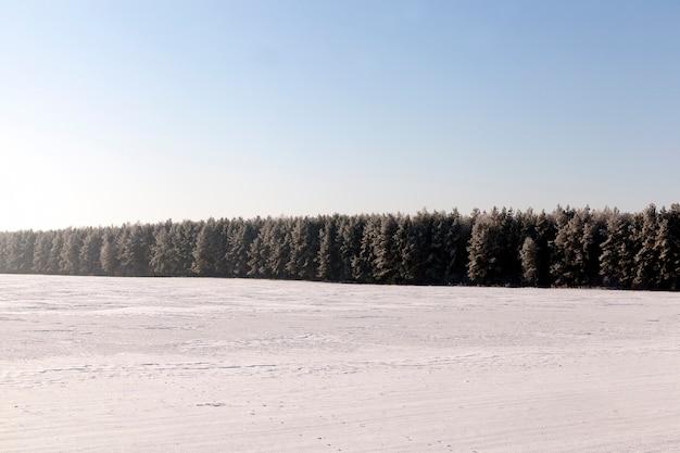 Plantas no inverno
