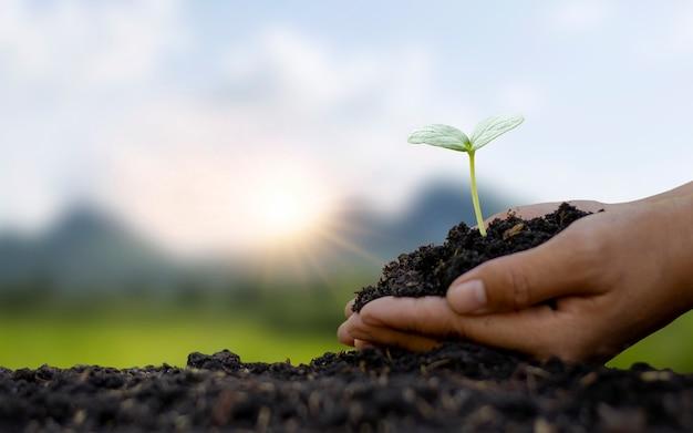 Plantas no solo com mãos humanas e fundo borrado da natureza verde