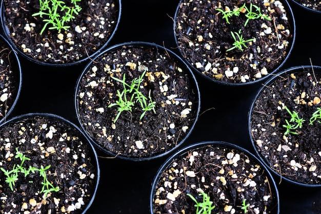 Plantas no solo no jardim
