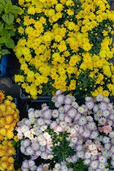 Plantas ornamentais em vasos e celofane para venda