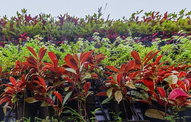 Plantas ornamentais no jardim