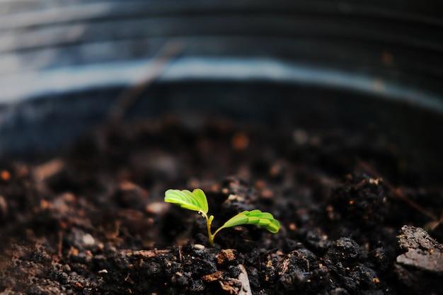 Plantas pequenas que crescem no solo na natureza com a luz solar para foliar o fundo.