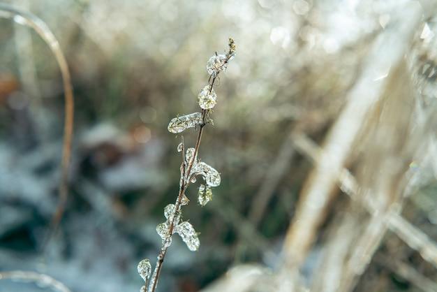 Plantas selvagens cobertas de gelo após uma foto em close-up de chuva congelante