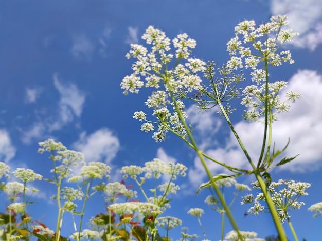 Plantas selvagens contra o céu