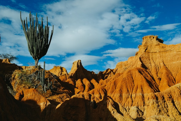 Plantas selvagens exóticas crescendo nas rochas vermelhas no deserto de tatacoa, colômbia