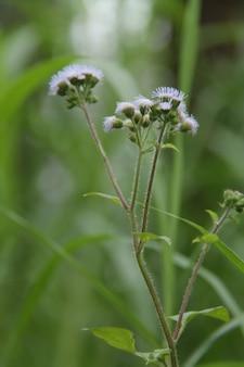 Plantas selvagens
