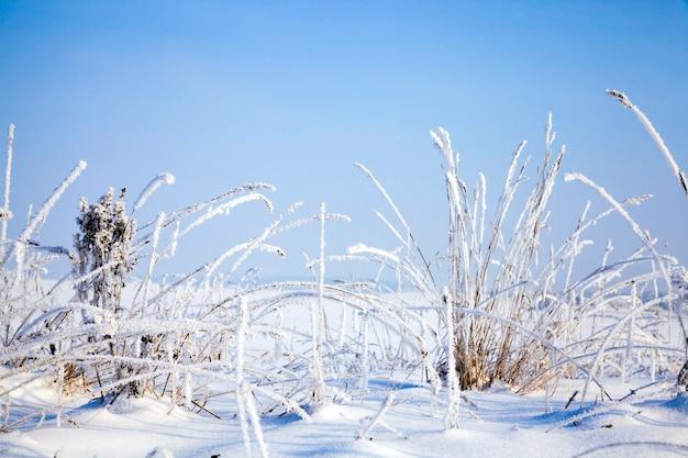 Plantas sob a neve na queda de neve do inverno