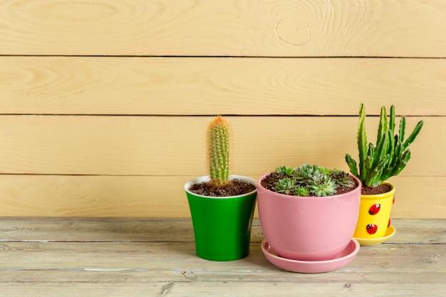 Plantas suculentas agrupadas na mesa
