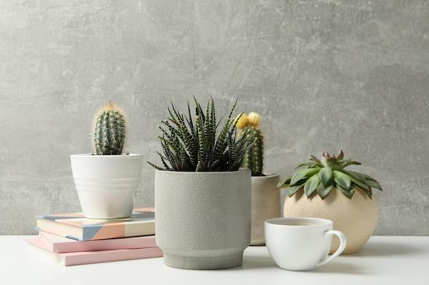 Plantas suculentas, café e cadernos contra a superfície cinza. plantas de casa