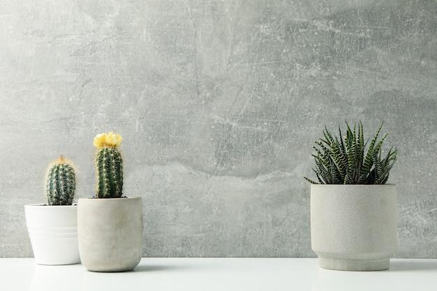 Plantas suculentas contra a superfície cinza. plantas de casa