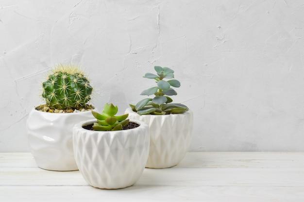 Plantas suculentas diferentes em vasos diferentes.