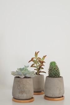 Plantas suculentas e cactos em vasos de concreto decoração moderna do quarto branco