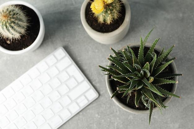 Plantas suculentas e teclado na superfície cinza, vista superior. planta de casa