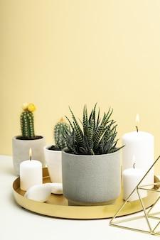 Plantas suculentas e velas na mesa branca. plantas de casa