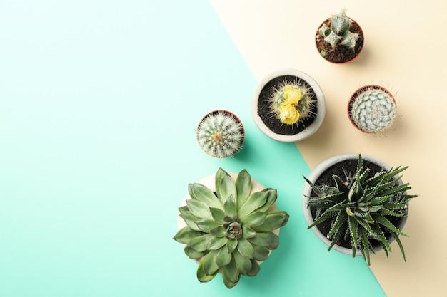 Plantas suculentas em fundo de dois tons, vista superior